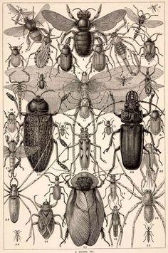 illustration UK zoologique noir et blanc : Edward Whymper, insectes, gravure…