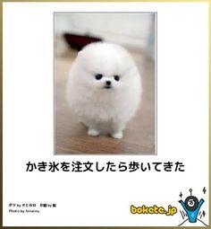 Animals And Pets, Baby Animals, Funny Animals, Cute Animals, Illustration Kawaii, Good Jokes, Felt Toys, Funny Comics, I Love Dogs
