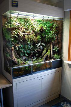 A very impressive Dutch Rana paludarium. Terrariums Gecko, Terrarium Reptile, Aquarium Terrarium, Terrarium Plants, Succulent Terrarium, Terrarium Tank, Reptile Habitat, Reptile House, Reptile Room