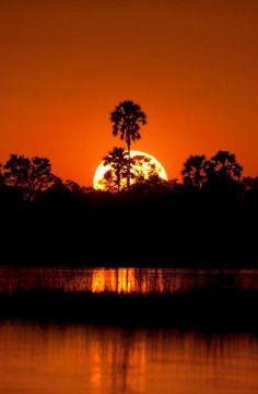 A burning sunset in the Okavango Delta, Botswana Botswana Travel Honeymoon Backpack Backpacking Vacation Budget Bucket List Wanderlust Beautiful World, Beautiful Places, Beautiful Pictures, Bleu Nature, Chobe National Park, Foto Fun, Okavango Delta, Thinking Day, Amazing Sunsets