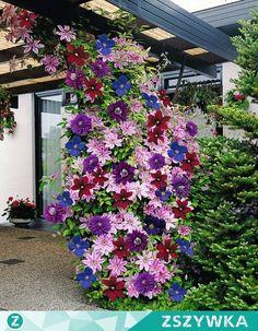 pomysł na kaskadę kwiatów