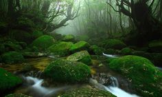 Yakushima Island in Kagoshima Prefecture, a place many Japanese people long to visit. The mystic forest of Yaku-sugi, or Yaku cedars, covered with moss wraps around and welcomes visiting travelers.