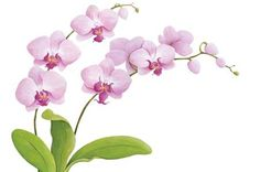 Up With Paper :: N023 Wild Orchid