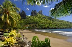 La végétation luxuriante des îles Marquises - Envie d'évasion en Polynésie ? http://www.ecotour.com/produit/combine-2-iles-polynesie-:-coup-de-coeur-n%C2%B01-99252?idPrice=35623906