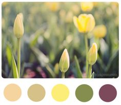 Colors: Elegant Eggplant, Old Olive, Daffodil Delight, Crumb Cake, and Blushing Bride Pantone 2016, Pantone Colour Palettes, Pantone Color, Colour Pallette, Color Combos, Kitchen Colour Schemes, Color Schemes, Daffodil Color, Colours That Go Together