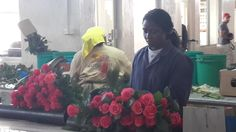 Woman packing roses (3)