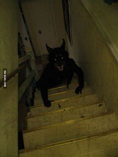 What would you do when you see this coming up your stairs?