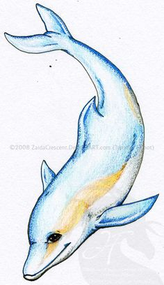 Dolphin Tattoo - Tattoos - Zimbio