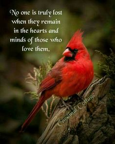 New Ideas For Cardinal Bird Quotes Love Life Quotes Love, Great Quotes, Me Quotes, Inspirational Quotes, Qoutes, Motivational Quotes, Miss You Dad, Bird Quotes, First Love