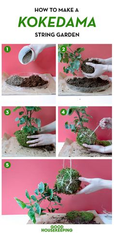More Than 25 How To Make A Kokedama String Garden ! How to Make a Kokedama String Garden ! String Garden, Moss Garden, Diy Garden, Autumn Garden, Garden Plants, Bonsai Garden, Succulents Garden, Garden Landscaping, Ikebana