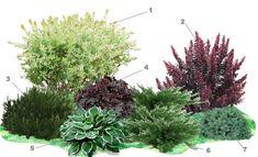Garden Plants Design, Garden Design, Steep Gardens, Shade Garden, Ornamental Grasses, Front Yard Garden Design, Small Garden Landscape, Evergreen Garden, Garden Planning