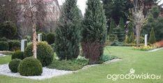 Ogród Dominiki - strona 107 - Forum ogrodnicze - Ogrodowisko