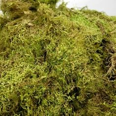 Natural Moss from Oregon (2.5 cubic feet) 7 lbs
