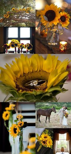 Inspirational Sunflower Wedding Ideas for love these sunflowers decorated every corner, fall weddings, spring weddings, diy wedding flowers wedding ideas Perfect Wedding, Fall Wedding, Diy Wedding, Rustic Wedding, Dream Wedding, Wedding Black, Wedding Ring, Wedding Stuff, Wedding Arbors