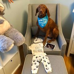Baby Items For Dog Lovers (@monofaces) • Instagram photos and videos Baby Outfits Newborn, Newborn Gifts, Vizsla, Mittens, Baby Items, Dog Lovers, Collections, Hat, Leggings