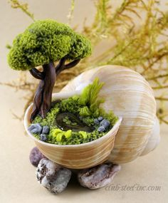 """Polymer clay """"topiary miniature garden"""" inside a spiral sea shell"""