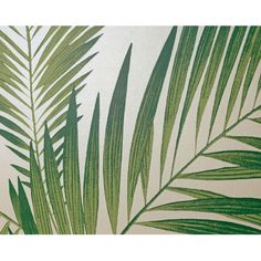 Tropical Palm Tree White Green Wallpaper Leaves Leaf Luxury Weight Arthouse  | eBay
