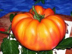 Marzipan gold Marzipan, Tomatoes, Pumpkin, Vegetables, Garden, Gold, Pumpkins, Garten, Lawn And Garden