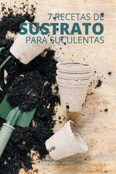 7 substrate recipes for succulents Garden Trellis, Garden Planters, Indoor Garden, Terrace Garden, Garden Beds, Full Sun Flowers, Cactus E Suculentas, Minimalist Garden, Garden Drawing