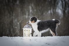 VIEW Fotocommunity Winter Schnee, Border Collie, Dogs, Animals, Animal Photography, Puppys, Animales, Animaux, Pet Dogs