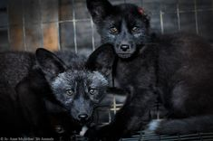 Foxes are killed so that their fur can be used for decoration by Spyder. Urge them to join the 21st century and end its sale of fur immediately.