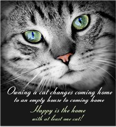 Owning a cat changes coming home to an empty house to coming home. Happy is the home with at least one cat!