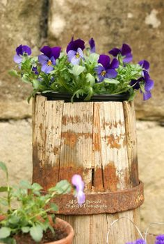 <3 Violets in a wooden bucket <3