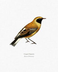 Vintage Bird Illustration, Vintage Birds, Public Domain, Bird Feathers, Natural History, Art Pieces, Digital, Artwork, Diy