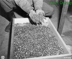 Rings from Buchenwald Concentration Camp in 1945