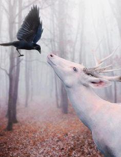 White #deer. #raven. #forest. #fog