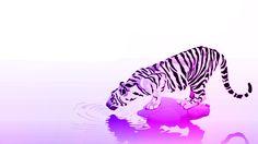 Pink Tiger Tiger Print, Cats, Pink, Animals, Gatos, Animales, Animaux, Animal, Cat