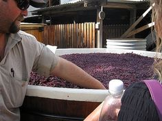 Australian Wines - Get Information about the Wineries and Terroir for Your Favorites Town Names, Wine Tourism, French Words, Next Holiday, A Whole New World, Fine Wine, Wine Making, Wineries, Western Australia