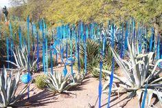 The Desert Botanical Garden, Papago Park, Phoenix AZ