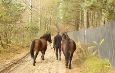 Walk with a carer Robert - Bimber i Browar, brothers young Huculs horses in the Hotel & Resort SPA Termy Medical WARMIA PARK in Poland (Warmia and Masuria, Pluski near Olsztyn)