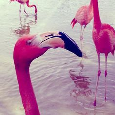 flamingos. They are gaudy & they don't care.