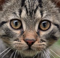 A kitten suffered and may have died when the poor animal was allegedly thrown into a large body of water. A viral video reportedly showed a teenager smiling as he hurled the frightened kitten. Demand justice for this innocent kitten.