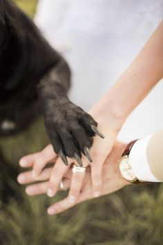 dog paw on the bride and groom hands