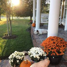 Happy Halloween! It's been a beautiful sunny day here in the South! I hope everyone had a safe and fun night! • • • #fallfeels #fallporch #myhomevibes #mysouthernliving #clpets #dslooking #dspets #farmhousechic #decorate4theseason #pumpkindecor #bhgpets #bhghome #bhgcelebrate #modernfarmhouse #countrylivingmag #mydomaine #ABMatHome #slhomes #fallporch #ggathome #happyhalloween #americanbulldogsofinsta #livewhereyoudwell #noplacelikehome #fallsunsets