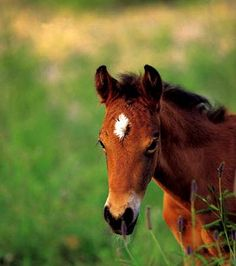 YEA / Youths' Equine Alliance