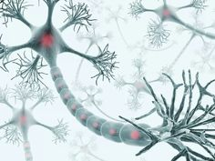Guillain-Barre is a potentially life-threatening autoimmune disorder of the peripheral nervous system that causes weakness, numbness, and other symptoms. Chronic Inflammatory Demyelinating Polyneuropathy, Cidp, Rare Disorders, Endocannabinoid System, Spinal Cord Injury, Central Nervous System, Chronic Fatigue Syndrome, Autoimmune Disease, Biology