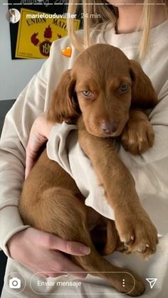 Shiba Inu, Golden Retriever, Labrador Retriever, Pug, Baby Animals, Cute Animals, Cute Dogs And Puppies, Doggies, Cute Creatures
