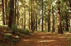 #3 Explore the Arboretum