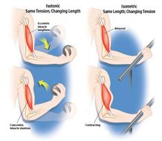 Isotonic Isometric exercises - Google Search