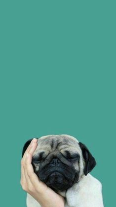 Wallpaper Celular Whatsapp Pug Ideas For 2019 Seagrass Wallpaper, Dog Wallpaper Iphone, Paintable Wallpaper, Bird Wallpaper, Animal Wallpaper, Colorful Wallpaper, Fabric Wallpaper, Screen Wallpaper, Cool Wallpapers For Phones