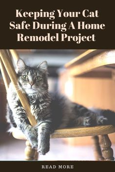 Home remodel projects are stressful for us and our cats. Here are some ideas to minimize stress and keep your cat safe during a remodel project.