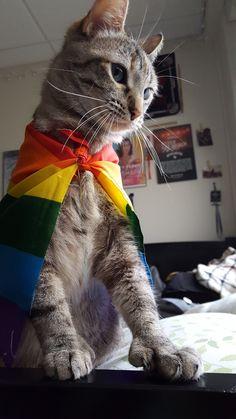 Pride Puss