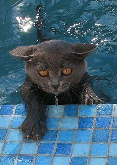 #gatos disfrutando del #agua
