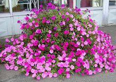 Flower beds, hanging baskets and containers with petunias awash backyards and garden with picturesque displays and offer easy to grow centerpiece ideas for fascinating outdoor living spaces. Description from lushome.com. I searched for this on bing.com/images