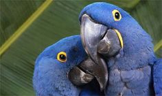 Mobile, Laptop and Desktop Wallpaper HD (High Resolution) - images/slides added under category of Wallpapers Fun Facts About Animals, Animal Facts, Parrot Facts, Parrot Bird, Cover Pics, Wallpaper Backgrounds, Desktop Wallpapers, Wallpaper S, Beautiful Birds