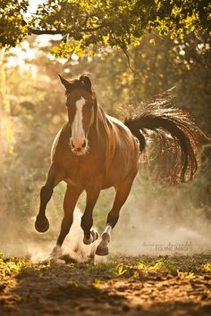 caterpiii: Strength in sunlight III. by equine-images